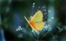 پروانه - ابعاد 1280x1024